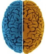 Brain Separation Under Examination