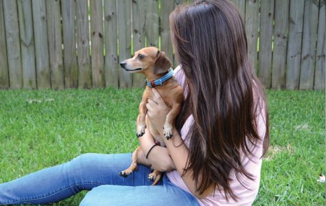 """Holding a dog, sophomore Lysandra Pecina is looking forward to Paws & Relax. """"Knowing that AP testing is over, I'm excited to de-stress with adorable dogs,"""" Pecina said."""