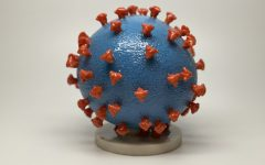 A 3-D model of the novel coronavirus, also known as COVID-19.